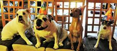 Birthday Party Planning Committee Doggie Bag, Party Planning, Birthday Parties, Dogs, Animals, Anniversary Parties, Animales, Birthday Celebrations, Animaux