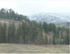 Spring plus snow capped mountains at beautiful Yellowstone National Park=perfection!