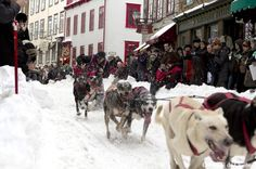 Dog sleigh race through magnificent Quebec City Streets | Quebec's Winter Carnival - Carnaval de Québec