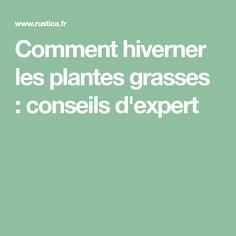 Comment hiverner les plantes grasses : conseils d'expert