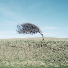 Bend in the wind, don't break. Why are you fighting your element??