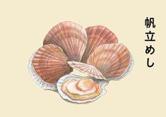 帆立のイラスト | 熊本のイラストレーター わたなべみきこ #貝 #ホタテ #ほたて #illustration Kumamoto, Illustration, Design, Illustrations