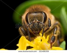 Extract Nectar Stock Photos, Images, & Pictures | Shutterstock