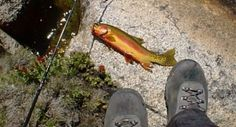 10 Best Golden Trout Fishing Lakes In The California Sierra – This is lake #9