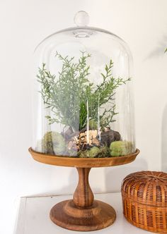 DIY Spring Terrarium Mantle