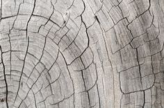 Realistic Graphic DOWNLOAD (.ai, .psd) :: http://jquery.re/pinterest-itmid-1006862884i.html ... Wood Pattern Trunk Texture ...  architecture, concumed, natural, old, pattern, rare, texture, trunk, vintage, wood  ... Realistic Photo Graphic Print Obejct Business Web Elements Illustration Design Templates ... DOWNLOAD :: http://jquery.re/pinterest-itmid-1006862884i.html
