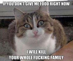 Psycho Cat.