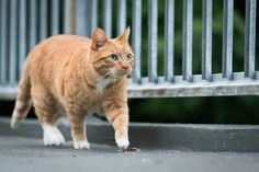 Car cars kat katten buiten outside walking lopen pet pets huisdier huisdieren .