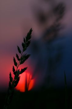 Aberrant Beauty: Photo