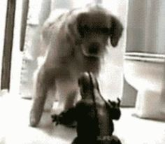 Cutest Dog GIF Ever: Golden Retriever Is Terrified Of Godzilla Toy