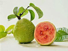 Khasiat Tanaman Obat Herbal : Apakah Jambu Biji (Psidium guajava) Penyebab Penyakit Usus Buntu ???