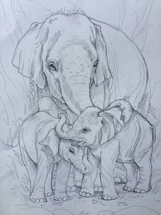 T T mother elephant and two babies
