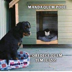 #maedecachorro #maedepet #filhode4patas #cachorro #cachorroterapia #gato #petmeupet