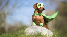 superhero weiner dog
