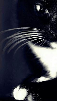 Otis. In Memory of...