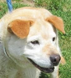 27 Hayle/SPONSORED is an adoptable Retriever Dog in Canton, OH.  Owner surrender. She is 10 yrs old, but gets around great. Available for immediate adoption. Hayle had a spa day on Saturday...bath, na...