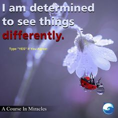 YES!  - Course In Miracles excerpt http://www.the-course-in-miracles.com/freecourse