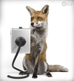 Fox with an iPad and a TabletTail: Monkey Kit..Basically what I see when any kid uses ipads/iphones b/c it blows my mind