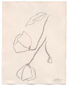 "Lauren Wang (wanglauren) on Instagram: ""Imaginary Flowers (n°1), black pencil on tea-dyed paper, 4 1/4"" x 5 1/2,"" 2017."