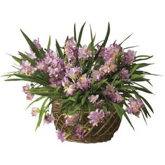 June 2013 Garden Basket With Pre-Planted Bulbs ($40) ❤ liked on Polyvore featuring home, home decor, floral decor, flowers, plants, backgrounds, floral, nature, fillers and flower basket