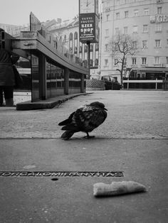 #street #asuszenfone5 #budapest #bird
