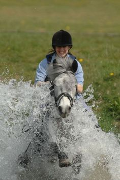 'Cause they're not afraid to get wet: UK Progeny - Applewitch New Forest Pony Stud