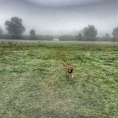 #misty #morning #maxwell in full flight #dogsofinsta