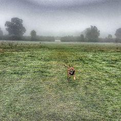 #misty #morning #maxwell in full flight #dogsofinsta