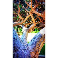 #california #san_diego #summer #balboa_park