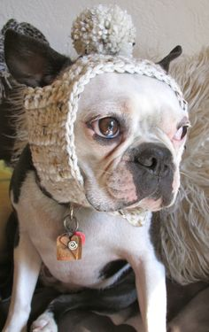Oatmeal dog hat.