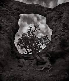 """""""ARCH TREE"""" Arches National Park, Utah An old Juniper tree grows beneath this large sandstone window in Arches National Park. Juniper Tree, Delicate Arch, Old Trees, Photosynthesis, Photo Tree, Growing Tree, Shutter, Tree Of Life, Arches"""