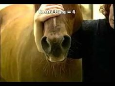 Clinical Signs of Heaves in Horses
