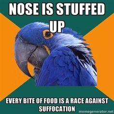 nose is stuffed up every bite of food is a race against suffocation | Paranoid Parrot