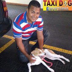 TAXI DOG MONTANHA TRANSPORTE DE ANIMAIS NO RIO DE JANEIRO: BRIGITTE (de Ipanema pra Consolação/SP)23/01/2016 ...