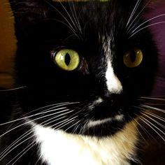 Cat eye Caturday.