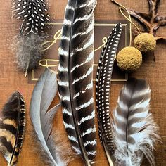 This color/texture scheme is perfection Plumage by golly bard Feather Art, Bird Feathers, Fabric Feathers, Eagle Feathers, Feather Crafts, Feather Photography, Fall Vignettes, Elements Of Nature, Natural History
