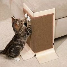 esquinero protector rascador para gatos