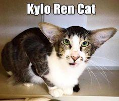 Kylo Ren Cat!