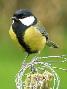birds spring ireland - Google Search