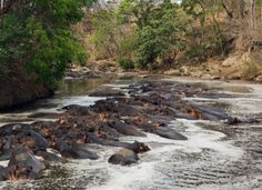 Selous Game Reserve (By air)1 night  2 days Africa safari