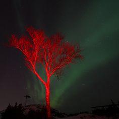 Nordlys Ålesund (Aurora borealis)