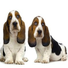 Testicular Implantation for Pets! http://whatpetswant.com/testicular-implantation-pets/