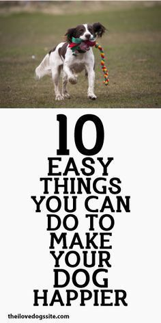 10 Easy Things You Can Do To Make  Dog behavior & personality -- Repin to your own inspiration board --