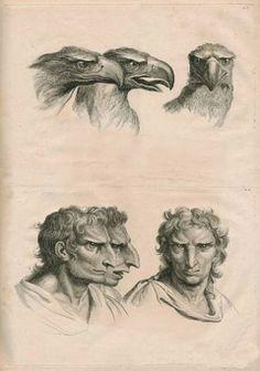 「人類が様々な動物から進化していたらと仮定したイラスト」海外の反応|暇は無味無臭の劇薬