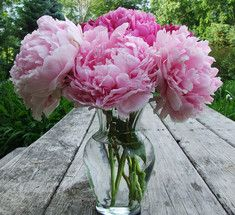 Пион - цветок благополучия