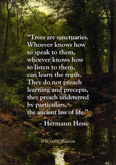 """Trees are sanctuaries. Whoever knows how to speak to them, whoever knows how to listen to them, can learn the truth. They do not preach learning and precepts, they preach undeterred by particulars, the ancient law of life."" – Hermann Hesse"