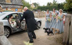 Bride being greeted by dog flower girls as she arrives at Maidwell church in Northampton Farm Wedding, Wedding Ceremony, Photography Portfolio, Flower Girls, Your Dog, Baby Strollers, Wedding Photography, Weddings, Bride