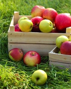 #Organic #Apples #HealthySnacks