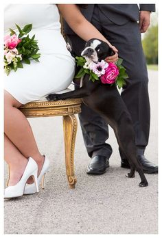 """Fantastic """"boston terrier pups"""" detail is offered on our website. Check it out and you will not be sorry you did Cute Puppies, Cute Dogs, Boston Bull Terrier, Super Cute Animals, Terrier Puppies, Dog Wedding, Puppy Love, My Best Friend, Best Dogs"""