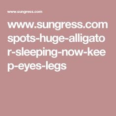 www.sungress.com spots-huge-alligator-sleeping-now-keep-eyes-legs